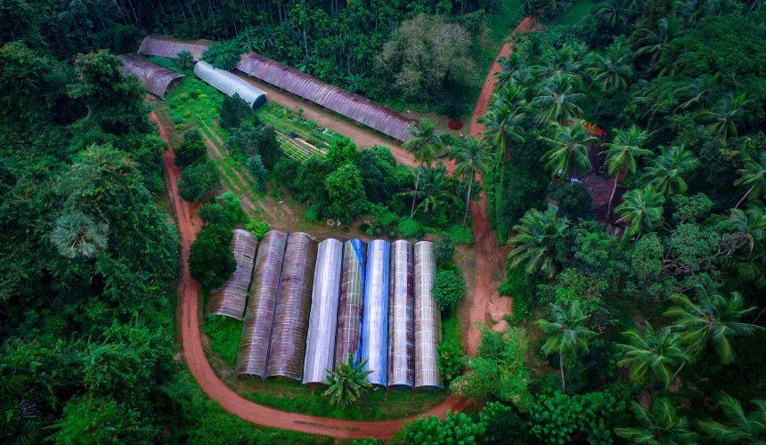 Varanashi Organic Farms